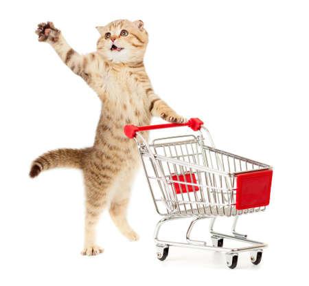 Katze mit Warenkorb isoliert auf weiß