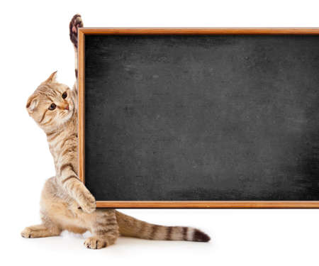 kitten isolated with blackboard for your text photo