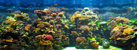 marine environment: big aquarium panorama