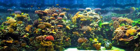 aquatic life: big aquarium panorama