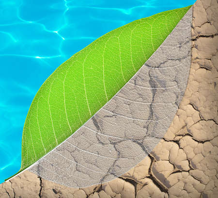 asymmetry: ecology life and water concept