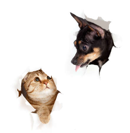 dogs play: cat and dog in paper side torn hole isolated