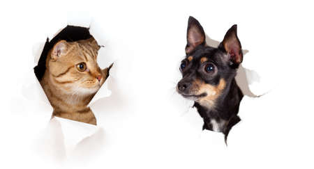 cat and dog in paper side torn hole isolated Stock Photo - 12785279