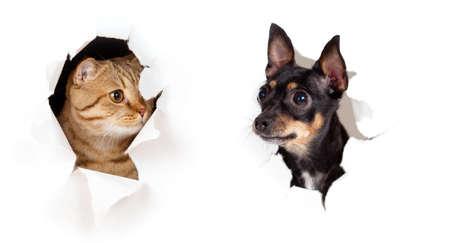 kat en hond in het papier opzij geïsoleerd gescheurd gat
