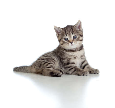 prankster: Lying pretty brittish tabby kitten Stock Photo