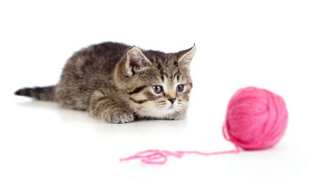 lying down on floor: British kitten playing red clew or ball isolated