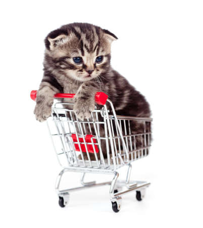 funny cat: little kitten sitting in shopping cart isolated on white