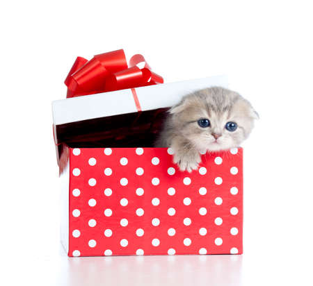 Funny baby cat in red gift box photo