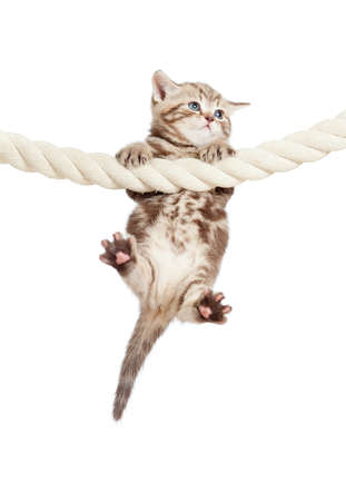 funny baby cat hanging on rope photo