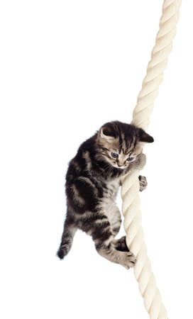 funny baby cat hanging on rope Stock Photo - 13359630