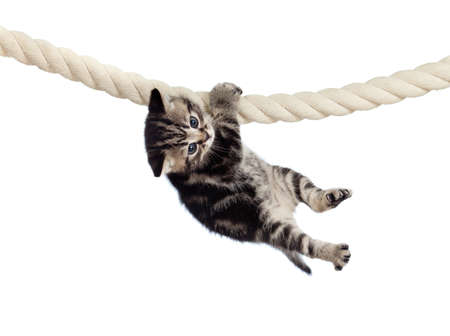 funny baby cat hanging on rope Stock Photo - 13359632