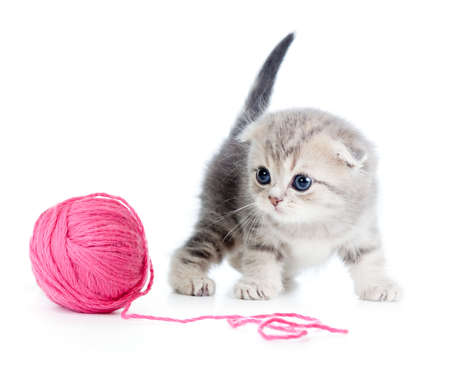 clew: british baby cat playing red clew or ball on white
