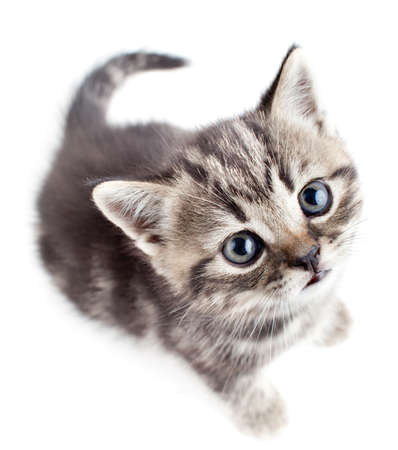 little baby kitten looking upwards top view photo