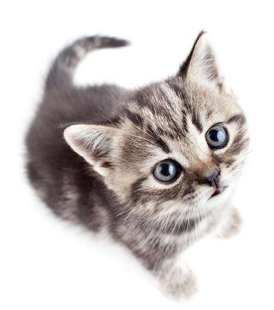 looking upwards: little baby kitten looking upwards top view
