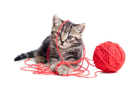 clew: nice tabby kitten playing red clew or ball Stock Photo