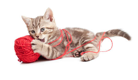 ball of wool: tabby kitten playing red clew or ball