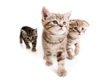 three kittens on white photo