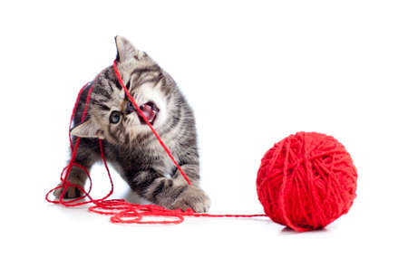 british pussy: nice tabby kitten playing red clew or ball Stock Photo