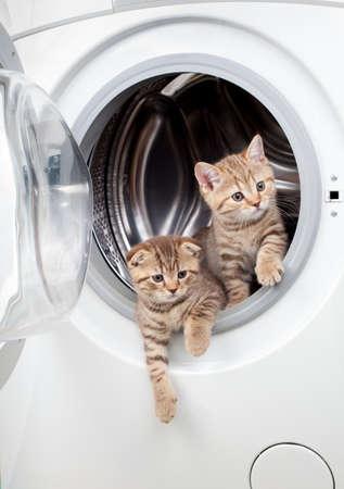 striped british kittens inside laundry washer photo