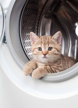 striped british kitten lying inside laundry washer photo