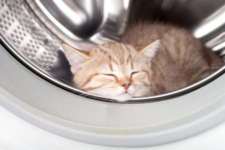 sleeping kitten lying inside laundry washer photo