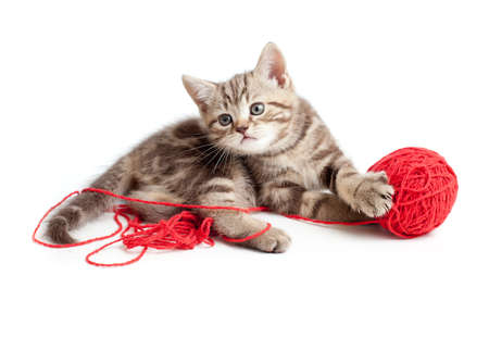 tabby kitten playing red clew photo
