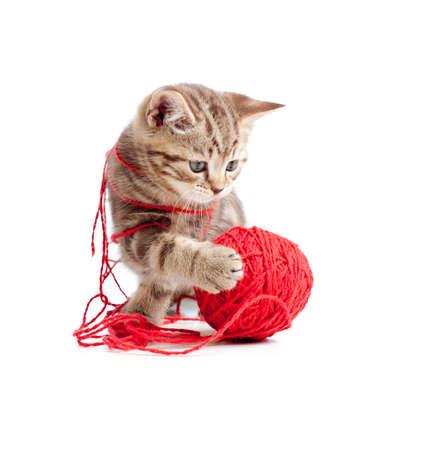 kotek: pręgowany kotek gry czerwoną nić Ariadny