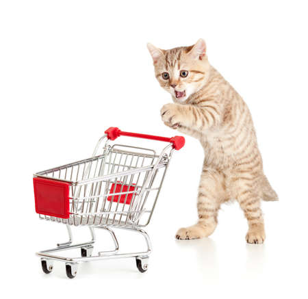 cat with shopping cart isolated on white photo