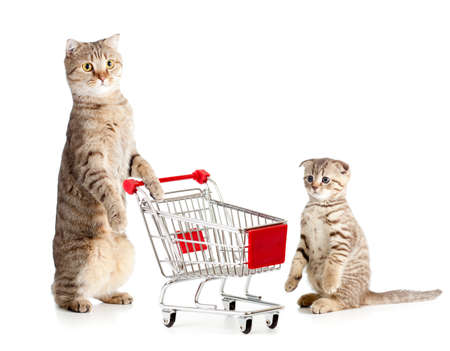 mother cat with shopping cart and kitten photo