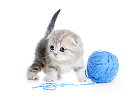 clew: british baby cat playing clew or ball on white