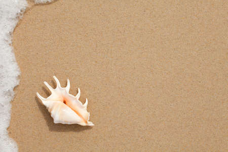 seashell top view on the sand of beach photo