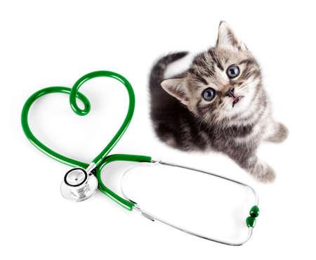zooth�rapie: V�t�rinaire pour animaux de compagnie concept de
