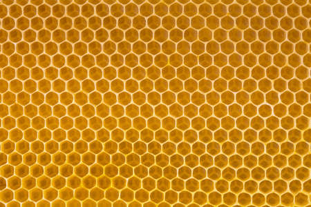 bee honey in honeycomb photo