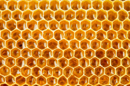 bee honey in honeycomb closeup Stock Photo - 14665427