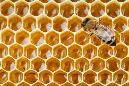 bee macro shot collecting honey in honeycomb photo
