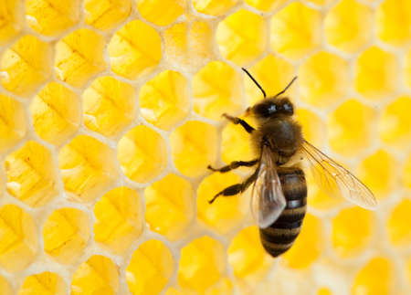 bee in honeycomb close-up shot photo