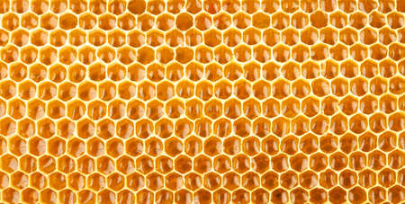 honeycomb full of honey closeup photo