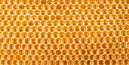 honeycomb full of honey closeup Stock Photo - 14804806