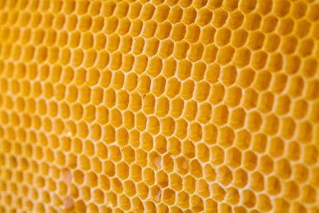 bee honey in honeycomb angle view Stock Photo - 14804805