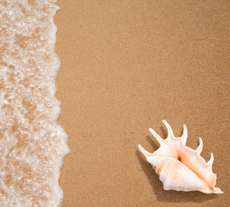 seashell top view on sea surf edge Stock Photo