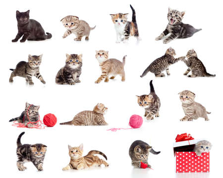 Adorable kittens collection. Little funny cats isolated on white. photo