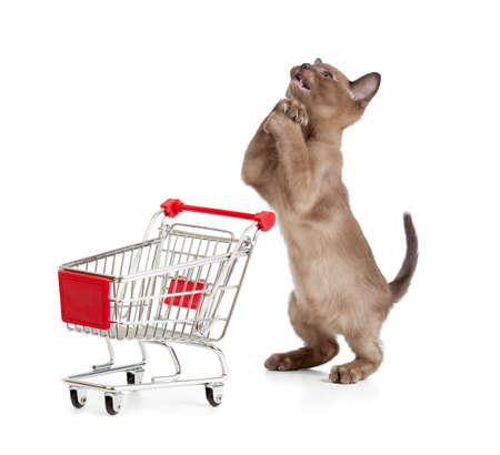 supplicate: Admiring kitten or cat with shopping cart Stock Photo