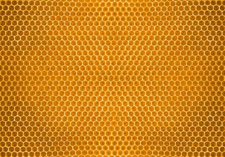 honey comb: bee honey in honeycomb Stock Photo