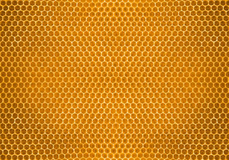 bijenhoning in honingraat Stockfoto