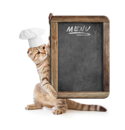 purebred cat: funny kitten in cook hat holding menu blackboard Stock Photo