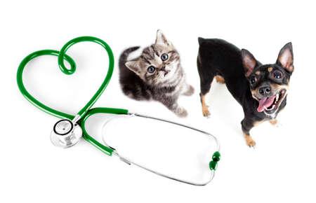 estetoscopio corazon: Veterinaria para gatos, perros y otros animales domésticos concepto