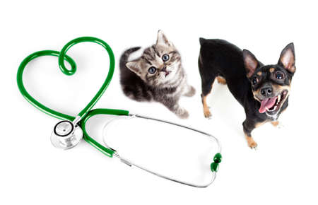 veterinary care: Veterinary for cats, dogs and other pets concept