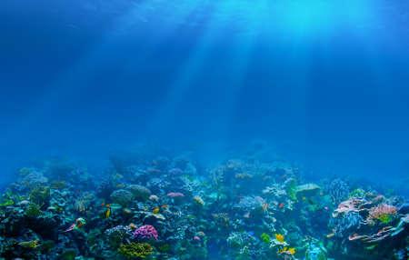 algas marinas: Coral arrecife submarino fondo