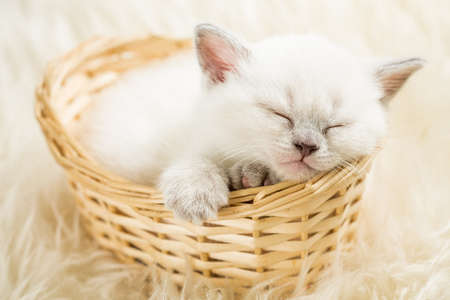baby animals: Sleeping kitten in basket