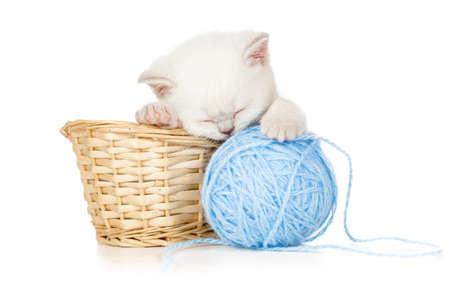 pussy yellow: sleeping kitten in basket